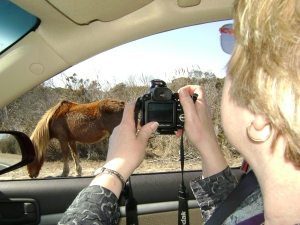 Pam taking pictures of the wild horses