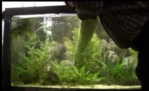 Rays tank